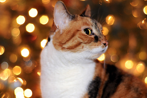"""Mitzi in a bokeh wonderland.."" HFF 