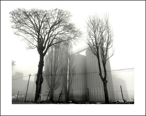 Sur un air de brume... | by mamasuco