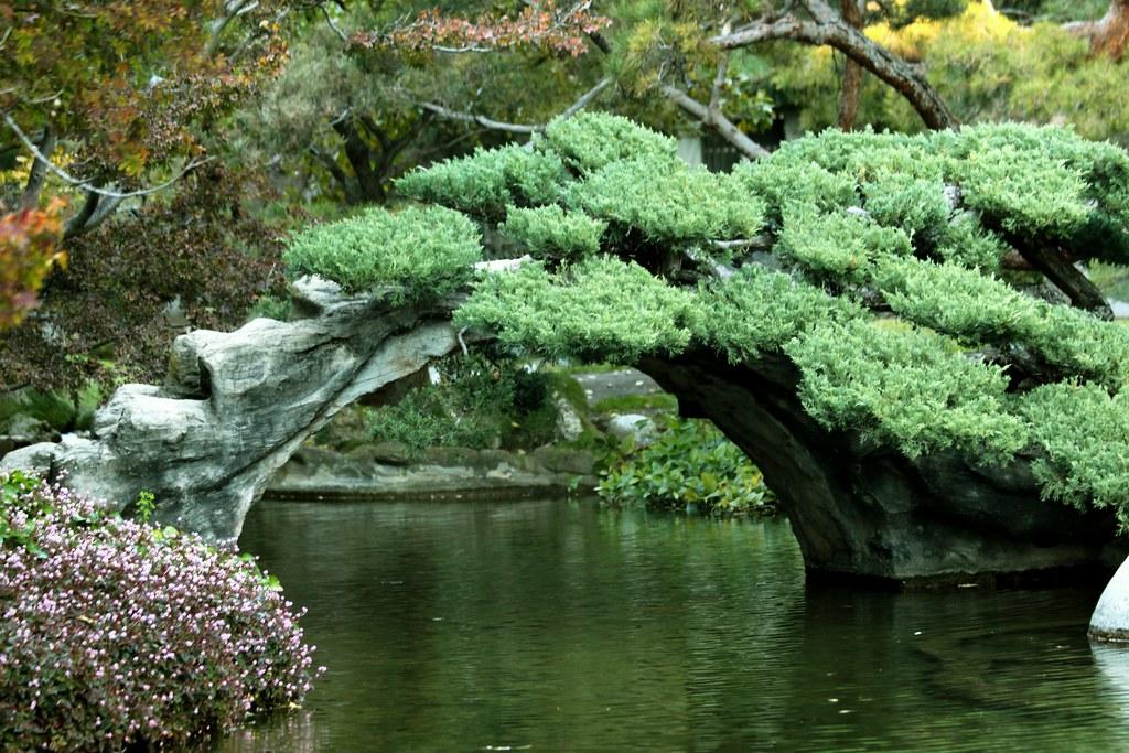 Japanese Garden Huntington Library Botanical Garden Pa Flickr
