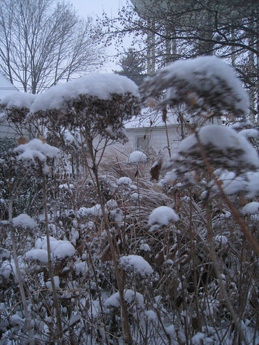 Winter in a garden of Missouri native plants | by mccormacka