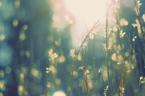 meadowlight | by lucy.loomis