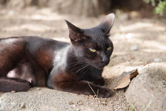 黒猫ちゃんはこの子っぽい