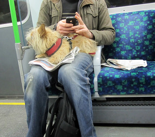 Dog on the Tube | by Annie Mole