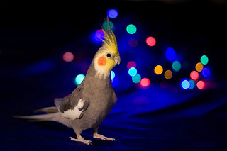 Party boy! | by Kerli'sPhotography