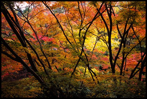 Autumn in Kyoto | by henrie