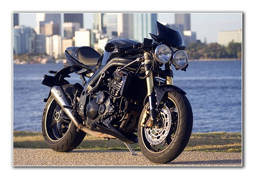 Speed Triple 1 | by Hamsters Pics