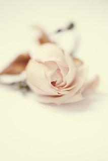 one rose blogged fraeulein frl klein flickr. Black Bedroom Furniture Sets. Home Design Ideas