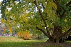 jardin botanique de tours by sybarite48 - Jardin Botanique De Tours
