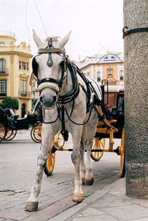 Horse and carriage | by ^RaVa^