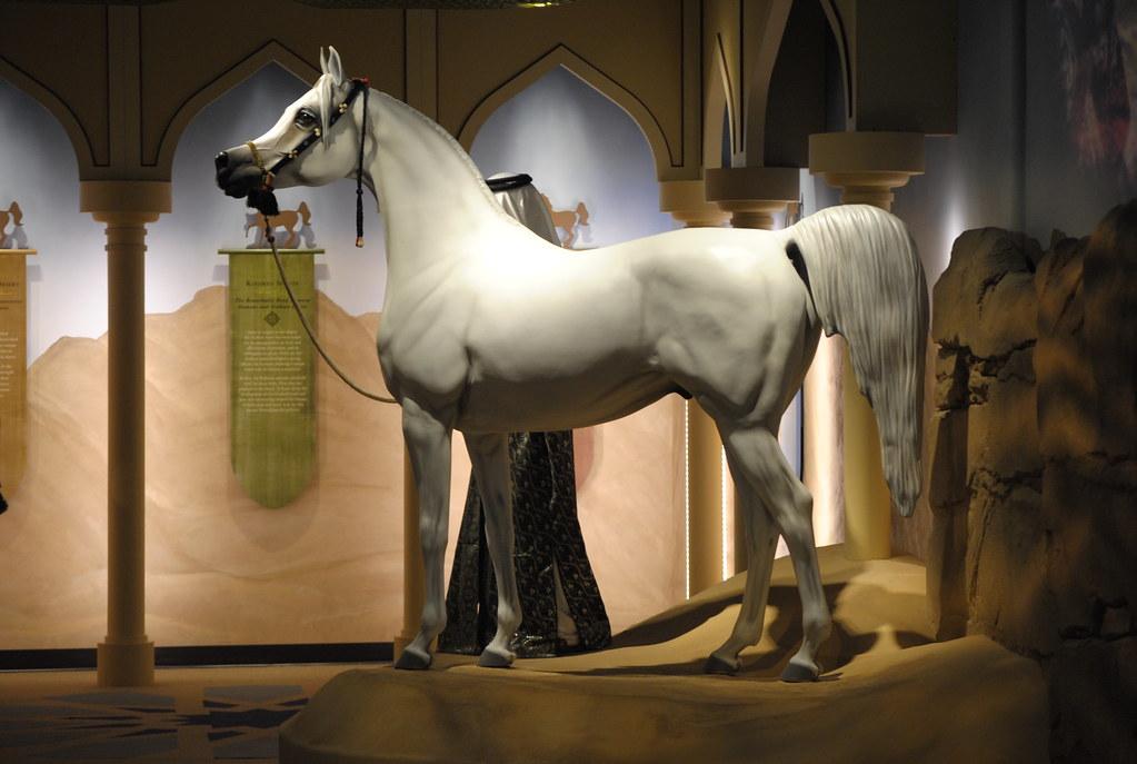 Картинки по запросу Arabian horses