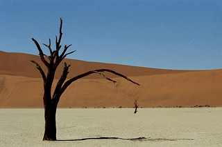 Deadvlei | by ronniedankelman
