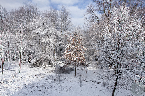 Backyard after snow | by Phil Romans