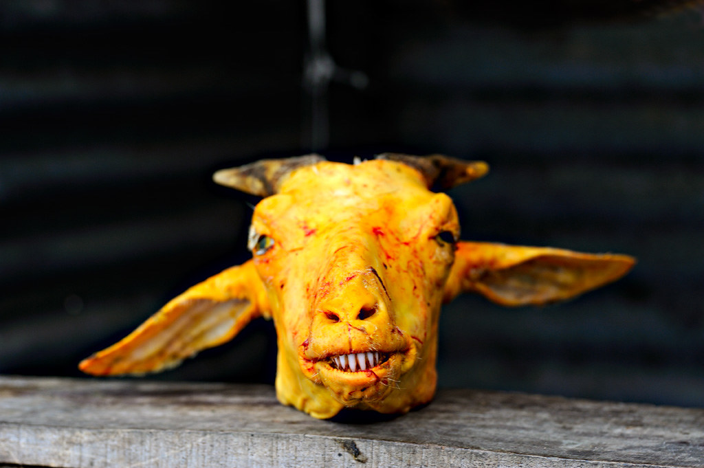 Darjeeling Goat Head