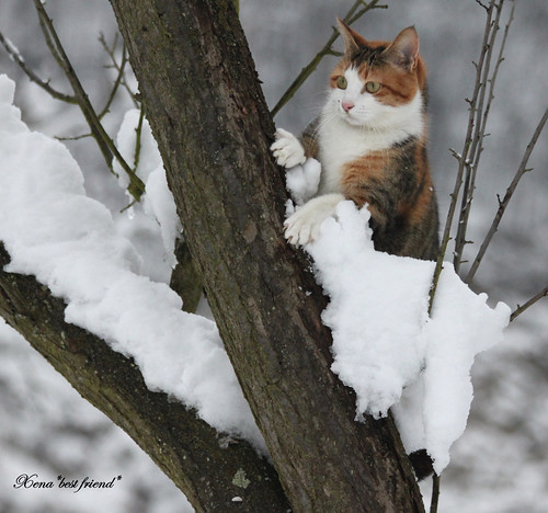 Mom, they say the spring is coming but I cannot see it... | by Xena*best friend*