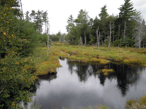 Maine fishery resorces office the designated population for Maine fish wildlife