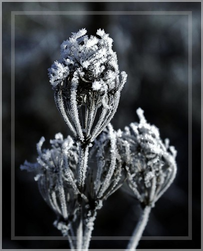 Frost | by Simply Viola ( Busy +off-on )