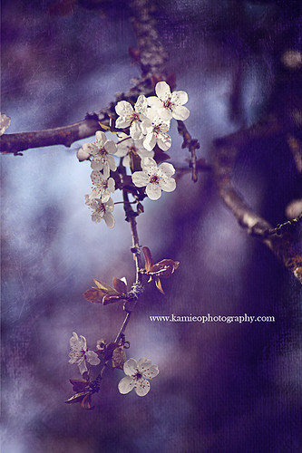 Spring 2011 | by Kamieo Photography