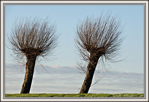 Trees | by ditmaliepaard