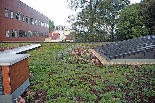 Toiture terrasse v u00e9g u00e9talis u00e9e (TTV) Siplast con u00e7oit