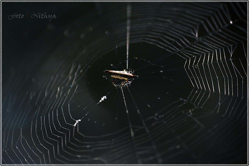 Jewel Spider-2 | by Nithyaseelan