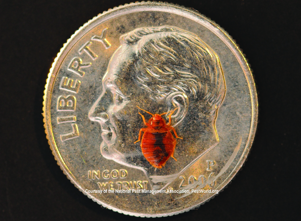 Size Of Bed Bug Compared To Dime Medill Dc Flickr