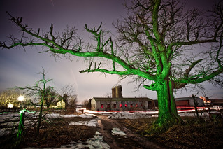 Big Green Tree Nocturne | by Notley