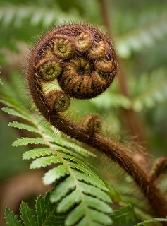 Koru | by Chook with the looks