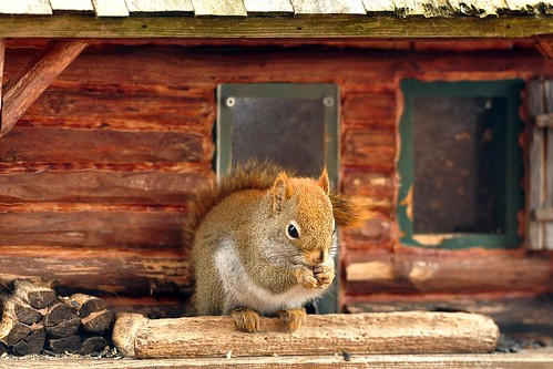 Good morning...welcome to my home! :) | by affinity579