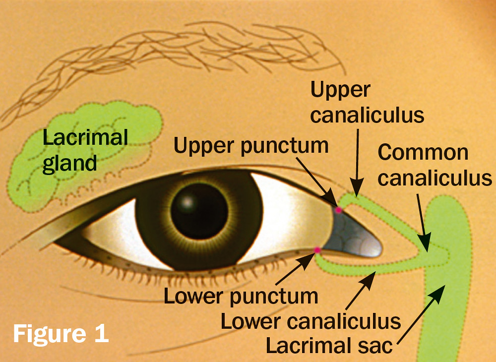 Anatomy of the lacrimal apparatus. | Illustration: ICEH Publ… | Flickr