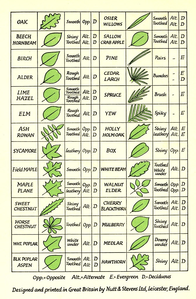 Pin by Herbal Roots zine on Herbal Identification | Pinterest ...