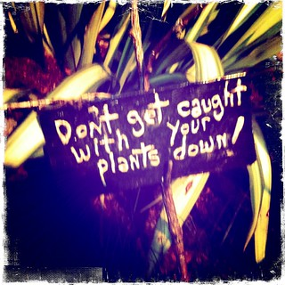 Don't get caught with your plants down! | by FarOutFlora
