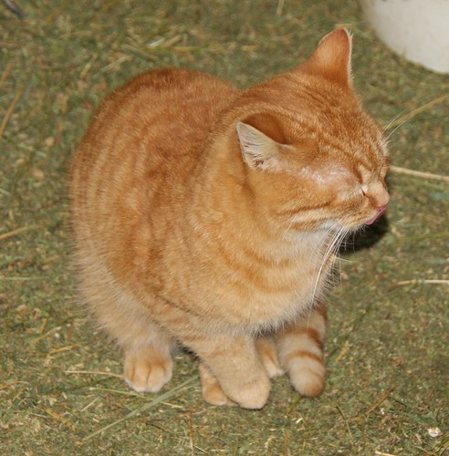 2011-01-27_Barn Cat | by Mark Burr