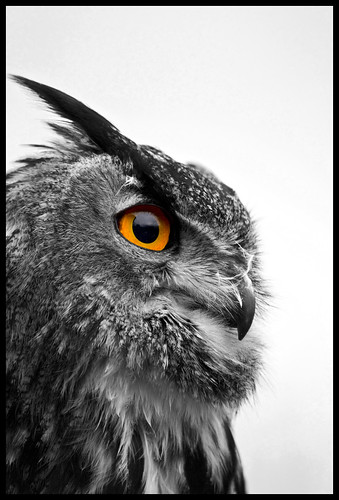 European Eagle Owl - Black and White | by Chris _E78