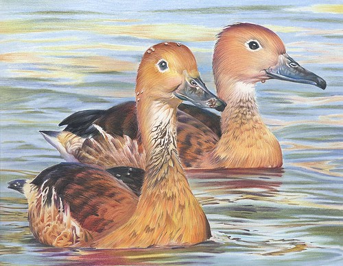 2010 Junior Duck Stamp Best of Show in California | by USFWS Pacific Southwest Region
