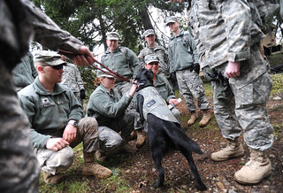 Stress Dog | by Army Medicine