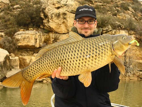 Carp attacked my softplastic bait | by wefish.de