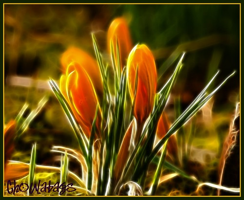 zingy crocus | by Choulabags