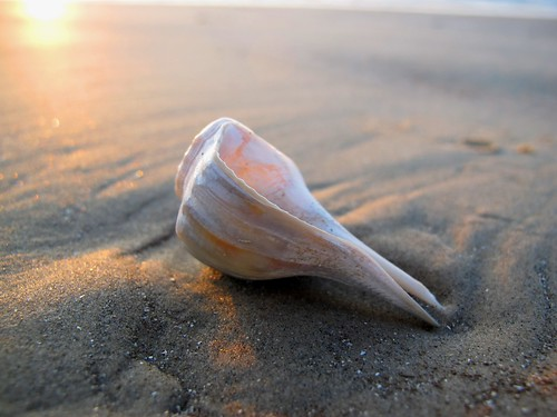 Shell on the Beach | by zoniedude1