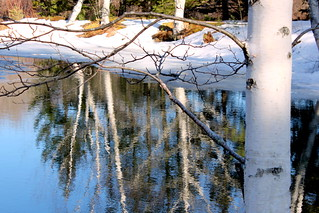 Melting Snow by the Little Pond with White Birch Tree Reflections | by Stephanie'sBestShots