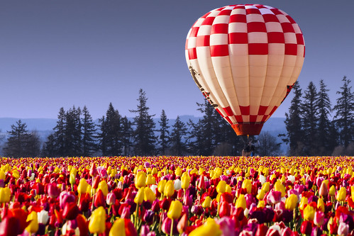 Hot Air Balloon & Tulips | by The Flannel Photographer