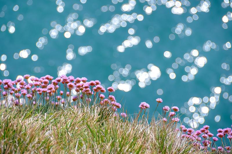 Clifftop sea pinks and bokeh sea ryme intrinseca facebook beckystaresphotography clifftop sea pinks and bokeh sea by ryme intrinseca facebook beckystaresphotography mightylinksfo