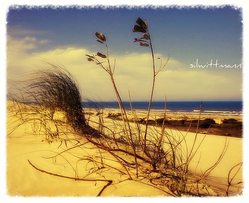 no mundo das areias e dos ventos.../ in the world of sand and wind ... | by silwittmann