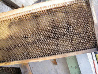 mould in the hive | by Shawn Caza