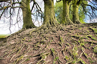 Avebury Tree Roots | by Gordon M Robertson