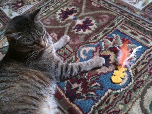 Is Biodegradable Cat Litter Flushable