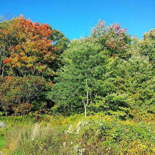Fall is here #SpragueBrookPark #wny #autumn
