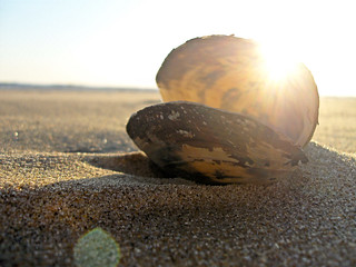 Clam | by Heather Carson