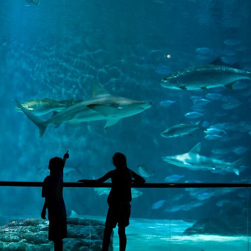 Gros poisson kids enjoying the golf of mexico exhibit at for Gros poisson aquarium