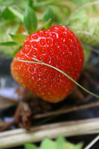 Strawberry | by macieklew
