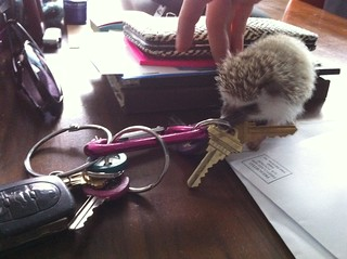 Normal Day at the Threadless Office- a Hedgehog stealing my keys | by rubberdanpants